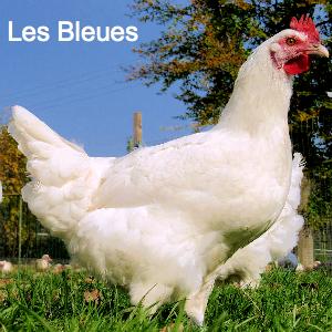les_bleues_fotor
