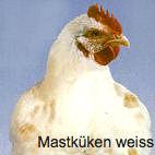 mastkueken weiss_fotor